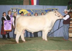 2009 National Western Stock Show Grand Champion Bull, TM GUS 36S raised and exhibited by the Marston family