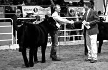 Hook was the associate judge for the Simmental Show at the 2012 National Western