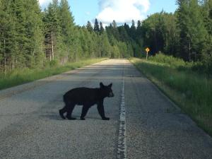 Riding Mountain National Park was not only home to the YCSA National Classic, but is home to the largest black bear population in North America.
