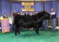 Wesner with WLE Uno Mas X549 at the 2012 NAILE.