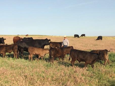 08-34- Cow calf pairs