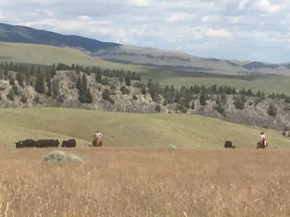 Hertha & Kim on Moore Hill